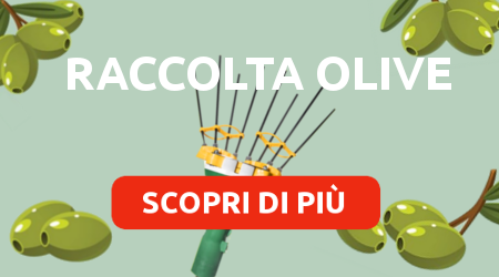 Banner raccolta olive 2018 IT