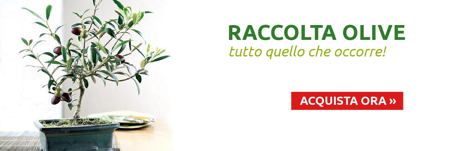 Promo RACCOLTA OLIVE IT